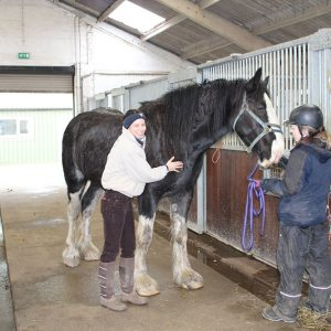 Dime the Shire Horse – HorseWorld Trust