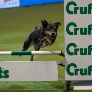 Jane Dalton wins Crufts 2020 Team Agility Championships first time!