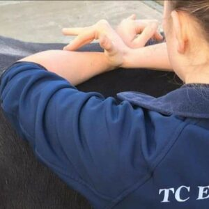 Life as we know it …. a McTimoney Animal Practitioner