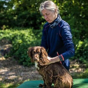 Free Webinar - Use of Chiropractic in the Agility Dog: 10th June @7pm