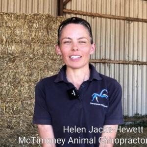 McTimoney treatments at the HorseWorld Trust